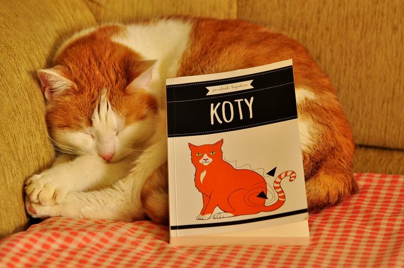 koty_1