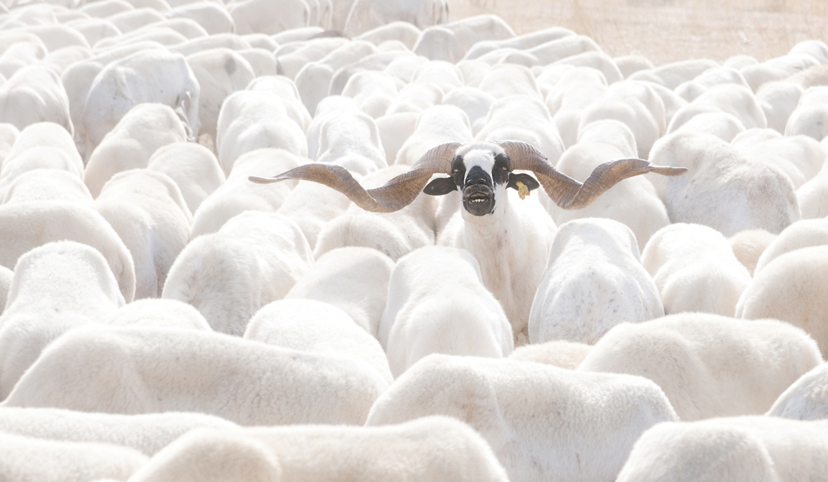 Out of the herd