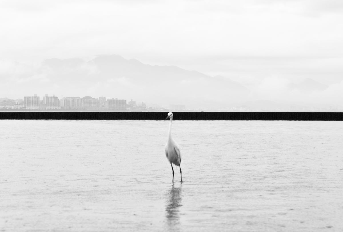 Hiroshima - Phoenix rising from the ashes, fot. Marcin Ryczek