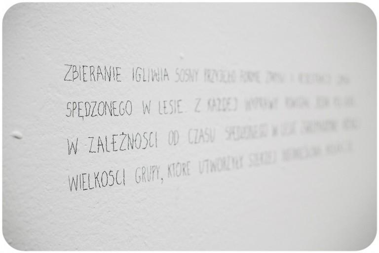 Paweł Szeibel, Pinus sylvestris 2015, Mocne stąpanie po ziemi, Galeria Sztuki Współczesnej BWA w Katowicach, kuratorka: Marta Lisok, fot. Barbara Kubska